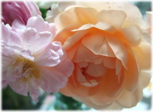 bouquet3.jpg