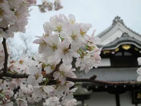 kyotokiyomizu1.jpg