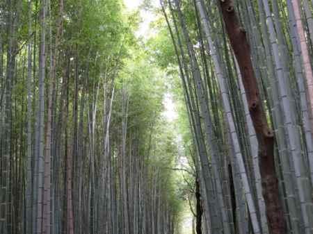 kyototake.jpg