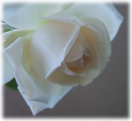 whitegold.jpg