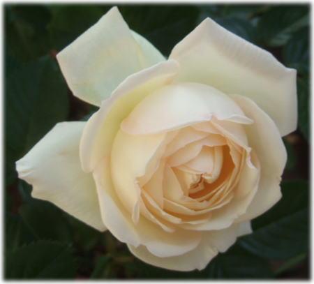 whitegold1.jpg